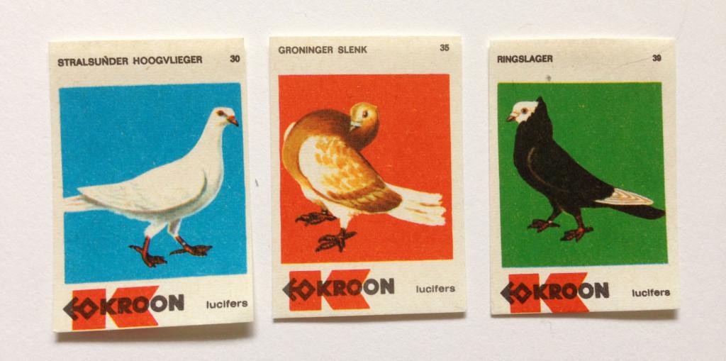 pigeons5