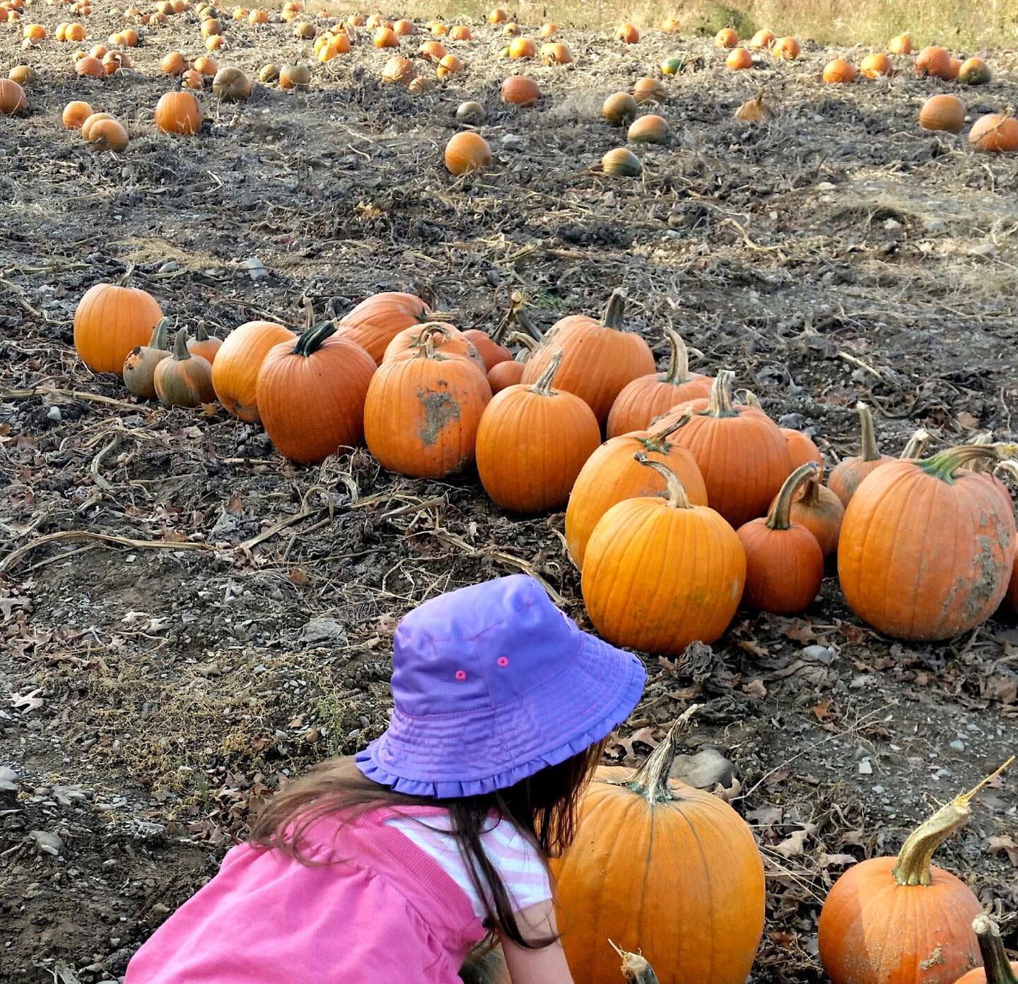 Pumpkin patch tested for quality assurance